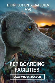 Outsourcing your pet hotel and boarding facilities janitorial services will cost-effectively improve your organization's disinfection strategies. Janitorial Services, Pet Hotel, Pet Boarding, In 2015, Your Pet, United States, Marketing, Pets, Healthy