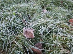 Protect your garden this winter by avoiding common mistakes that put plantings at risk.