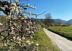 Wandern am Panoramaweg Rossatz   Wachau Inside Austria, Sidewalk, Traveling, Country Roads, Road Trip Destinations, Vacation, Viajes, Side Walkway, Walkway