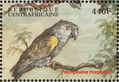 Rüppell's Parrot stamps - mainly images - gallery format