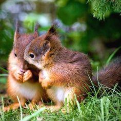 Did you hear...... Cute Squirrel, Baby Squirrel, Squirrels, Ground Squirrel, Cute Baby Animals, Animals And Pets, Funny Animals, Nature Animals, Wild Animals
