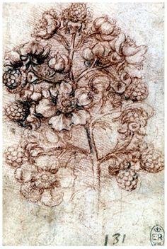 A sprig of blackberry (Rubus fruticosus), Leonardo da Vinci (Vinci (artist) , , Red chalk with touches of pen and ink Michelangelo, Botanical Illustration, Botanical Art, Botanical Drawings, Drawing Sketches, Art Drawings, Natural Forms, Natural Red, Renaissance Art