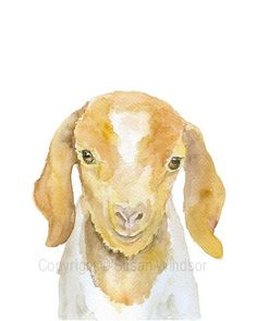 Nubian Goat Watercolor