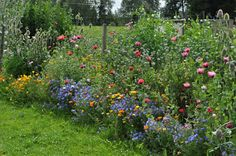 Blomkärringens Trädgård: augusti 2012