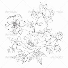 Bush of Beautiful Peonies - Flowers & Plants Nature