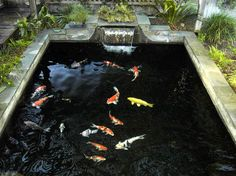 """Koi fish are the domesticated variety of common carp. Actually, the word """"koi"""" comes from the Japanese word that means """"carp"""". Outdoor koi ponds are relaxing. Fish Ponds Backyard, Koi Fish Pond, Backyard Water Feature, Garden Ponds, Koi Ponds, Backyard Stream, Large Backyard, Garden Path, Pond Landscaping"""