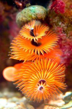 Under the Sea Fabulous Snapshots) ! - Part Super Under the Sea Fabulous Snapshots) ! Under The Water, Under The Sea, Underwater Creatures, Underwater Life, Underwater Plants, Beautiful Sea Creatures, Deep Sea Creatures, Sea And Ocean, Sea World