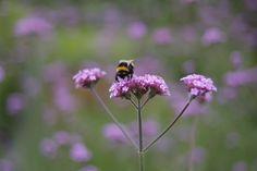 ogrod.krakow.pl Rośliny Dandelion, Bird, Flowers, Plants, Animals, Animales, Animaux, Dandelions, Birds