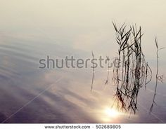 water texture with sun reflection and some grass