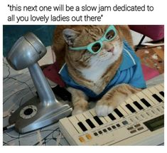 20 Hilarious Cat Memes To Upgrade Your Caturday