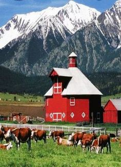 Octagon Barn & Cows - outside of Joseph Or - beautiful country. what a beautiful, unusual barn. Farm Barn, Old Farm, Country Barns, Country Life, Country Living, Porches, Barn Pictures, Barns Sheds, Red Barns