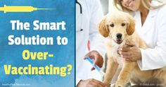 Most of the conventional veterinary community believes vaccine titer tests are difficult to interpret and therefore, automatic re-vaccination is a better option. http://healthypets.mercola.com/sites/healthypets/archive/2016/12/03/vaccine-titer-test.aspx