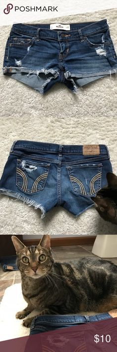 Distressed Short shorts My cats favorite booty shorts! Great for a country concert. Hollister Shorts Jean Shorts