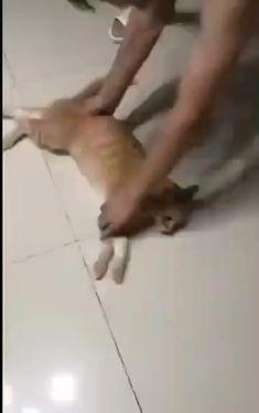 Animal Jokes, Funny Animal Memes, Funny Cat Videos, Funny Animal Pictures, Funny Cute Cats, Cute Funny Animals, Photo Chat, Cute Animal Videos, Cute Little Animals