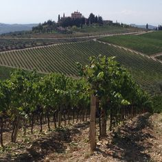 "Le vigne toscane meta dei vostri ""WINE Wedding® "" Tuscan vineyards for your "" WINE Wedding® """