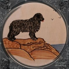 Newfoundland Dog - Porthole Vignette Drawing by Barbara Griffin