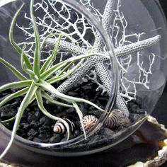 Black and White Air Plant Terrarium by seaandasters on Etsy, $25.00