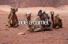 Ride a camel. Next week. On the beach. In Africa. My life is not real. The Bucket List, Bucket List Before I Die, Goals Tumblr, Parque Natural, Life List, Places To Go, Things To Do, Wild Things, Camels