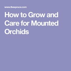 How to Grow and Care for Mounted Orchids