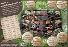 Make a super simple bug hotel and check this graph for extra info on what bugs like!