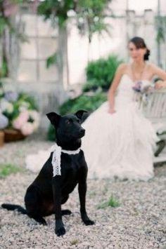 dogs at wedding. Read more - http://www.hummingheartstrings.de/index.php/zeremonie/hochzeit-mit-hund/
