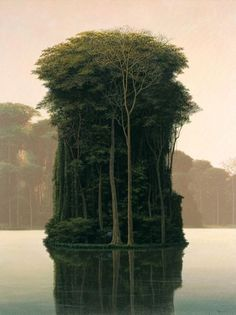An island of trees which have grown together so beautifully. Would be peaceful to sit at the shore or in a little boat on the water and watch, marvel at how a tiny circle of tree trunks could create so much depth.