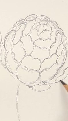 Botanical Drawings, Botanical Art, Botanical Illustration, Learn To Draw Flowers, Landscape Sketch, Learn Art, Krishna Art, Drawing Lessons, Floral Illustrations