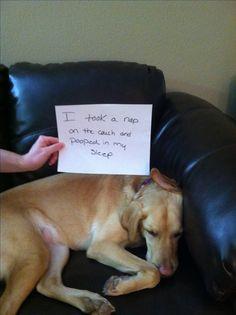 Dog shame, dog shaming