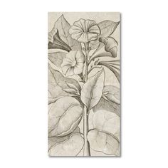 Find it at the Foundary - 12 x 24 in. Hand Printed Modern Bold Limestone Tile