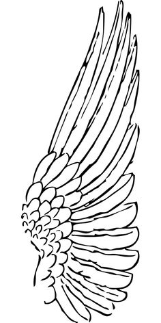Drawing Feather Outline Outline Of A Wing - Clip Art Library Angel Wings Drawing, Angel Wings Painting, Angel Wings Art, Feather Angel Wings, Bird Wings, Angel Art, Wings Sketch, Feather Drawing, Feather Clip Art