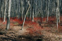 Haunted Forest, Watchung Reservation
