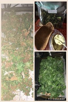 I made my first batch of Alkaline Seasoned Kale chips with some of my fav avocado hummus with flat bread for lunch or snack!