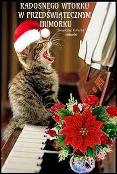 Online Photo Editing, Photo Online, Picture Editor, Photo Editor, Happy Christmas Wishes, Edit Your Photos, Image Editor, Good Morning, Inspirational Quotes