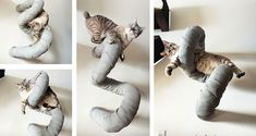 Cat Toy Graveyard Archives ⋆ Catastrophic Creations pvc pipes with rope and or fabric wrapped around. SO SIMPLE Cat Wall Furniture, Cat Litter Mat, Cat Traps, Diy Cat Tree, Cat Towers, Cat Shelves, Cat Playground, Super Cat, Cat Enclosure