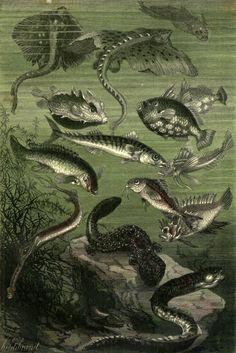 muirgilsdream:  Alphonse Neuville, illustration from 20 Thousand Leagues Under the Sea.