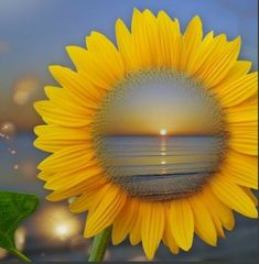 My two favorite things. A sunset and a sunflower 💗 Sunflower Garden, Sunflower Art, Sunflower Fields, Sunflower Quotes, Sunflower Pictures, Happy Flowers, Beautiful Flowers, Sun Flowers, Sunflowers And Daisies
