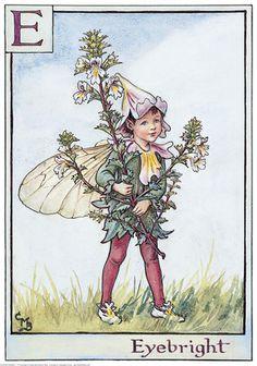 Eyebright, Flower Fairies, Cicely Mary Barker カラフトヒヨクソウ、セイヨウコゴメグサ