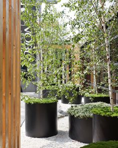 Circular planters that we had the pleasure of making for in the brilliant contemporary Japanese influenced garden for Planter Boxes, Planters, Pine Garden, Australian Open, Box Design, Landscape Architecture, Garden Design, Japanese, Contemporary