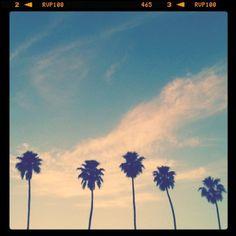 palm tree polaroid
