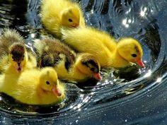 duckyyyyss