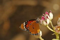 Beautiful Tiny Butterfly Download Thousands Of HD Wallpaper From Mukesh Garg's Unlimited Focus Gallery Butterfly, Nature