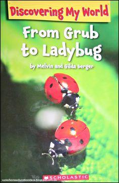Suzie's Home Education Ideas: Life Cycle of a Ladybug