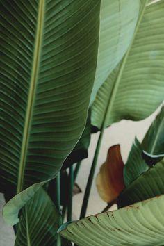 plants :
