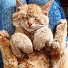 """only-cats-photos: """" Super Cute Rikitiki http://ift.tt/10ZiZ1U - Follow me http://ift.tt/Roy1qi """""""