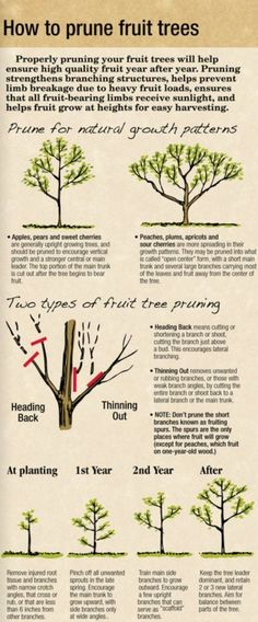 HOW TO PRUNE FRUIT TREES arborday.org by roslyn by roslyn