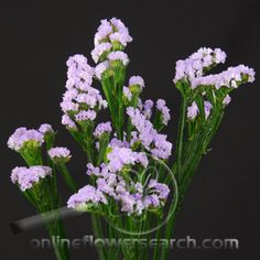 Statice Lavender,  Limonium (sinuatum?).  Master of the look of freshness.  Underrated in competition floral design, because it's used so much in retail bouquets.