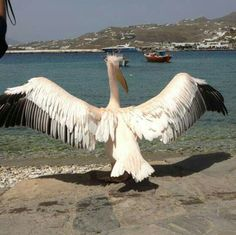 The Mykonos Maskot