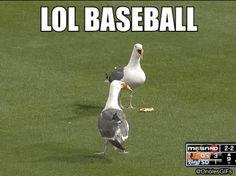 gulls-lol-baseball.gif (476×355)