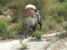 Elephant riding at the Hutsadin Elephant Sanctuary in Hua Hin, Thailand Elephant Ride, Elephant Sanctuary, Stuff To Do, Thailand, Fun, Animals, Animales, Animaux, Animal