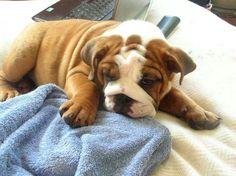 Snuggly. AC